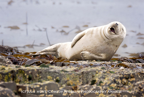 Comedy wildlife photography awards 2015 seal