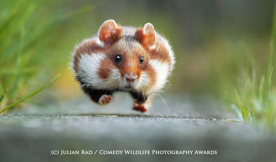 Comedy wildlife photography awards winner