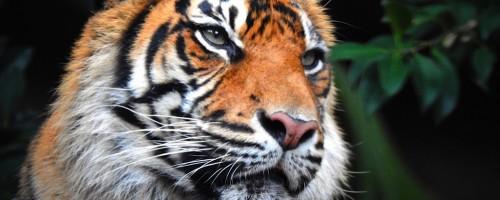Australia zoo photography experience